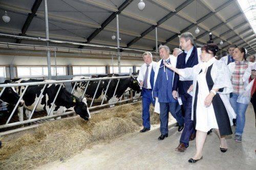 Ткачев: закрыть дефицит молока удастся затри-пять лет